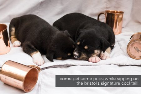 The Bristol to Host Moscow Mules & Mutts Event
