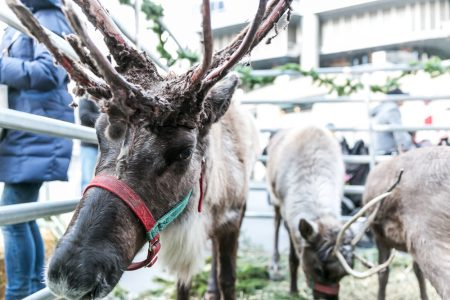 Kick off the Holiday Season with Reindeer on the River