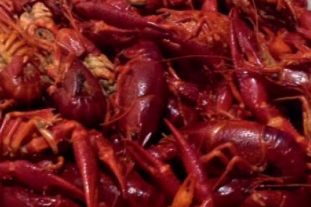 Crawfish Eating Contest for Charity at Cactus
