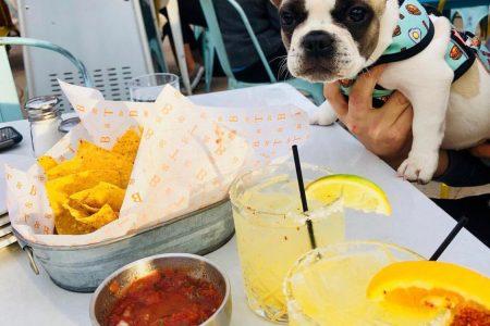4 Star Restaurant Group Celebrating National Dog Day August 26
