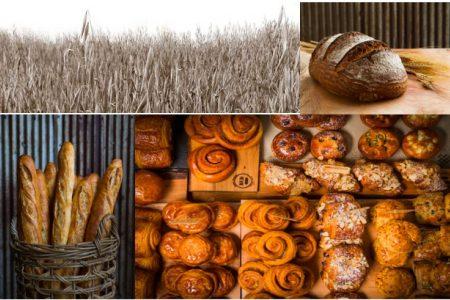 Organic Farming and Bread Making Field Trip led by Hewn and Hazzard Free Farm